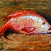 Oil Sketch, Red Snapper 2